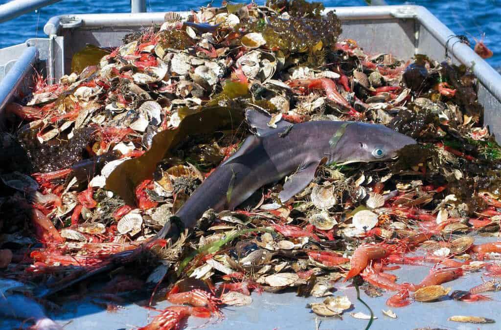 Industry Destroying Industry: Overfishing