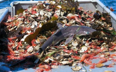 Industry Destroying Industry: Overfishing
