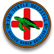 Turtle Hospital and Rehab, Marathon FL